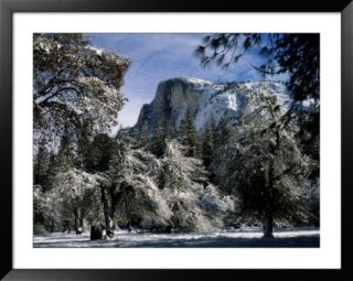 Snow covered trees frame Half Dome Mountain in California Pre made Frame