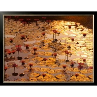 Art   Lotus Pond Framed Print
